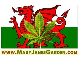 marijuana wales