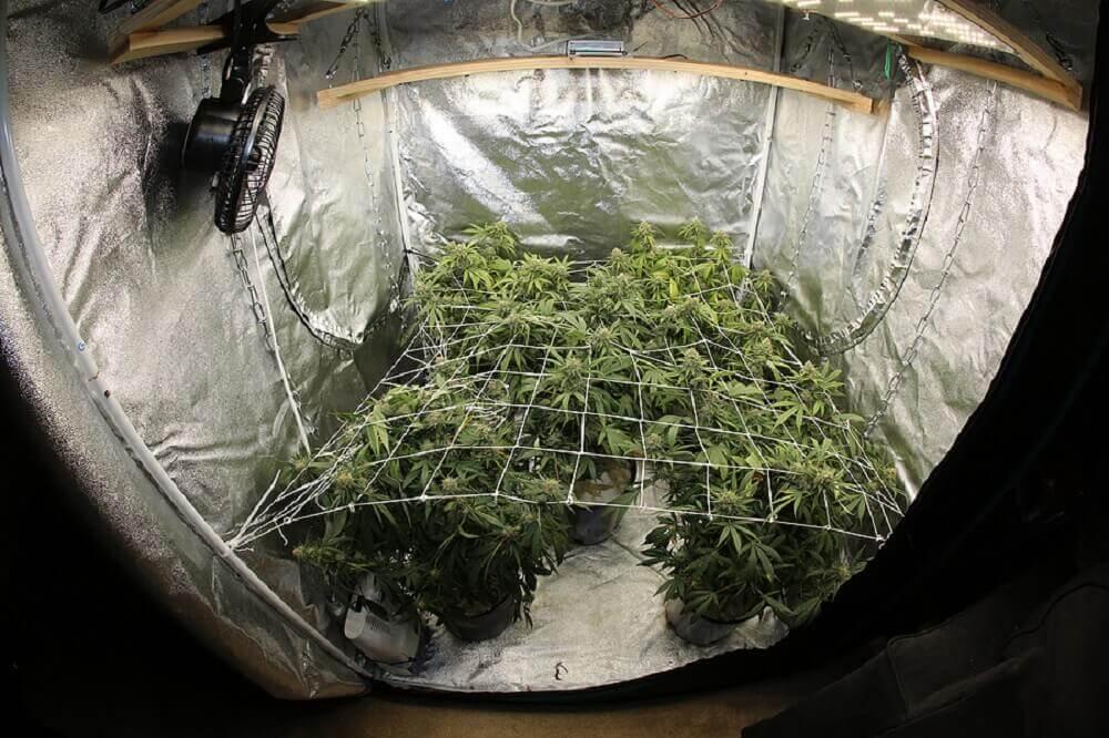 DIY grow tent ideas indoor